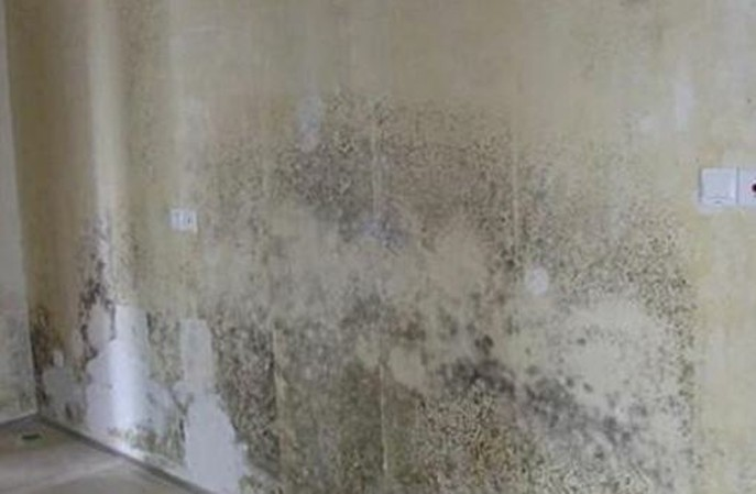 旧仓库墙面发霉怎么办?如何翻新墙面保证持久不长霉?